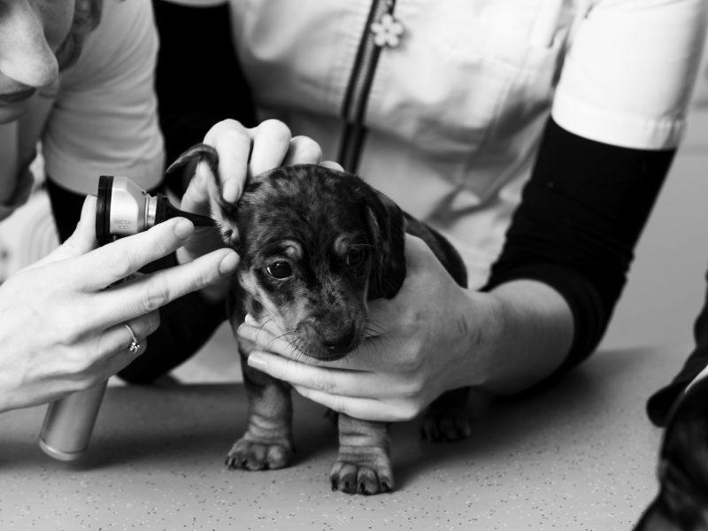 Nieuwe pup of kitten | Dierenkliniek Nuland